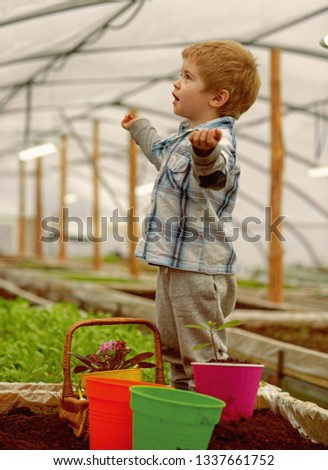 learning ecology. small boy learning ecology in greenhouse. learning ecology while working with plants. learning ecology for little gardener. #1337661752