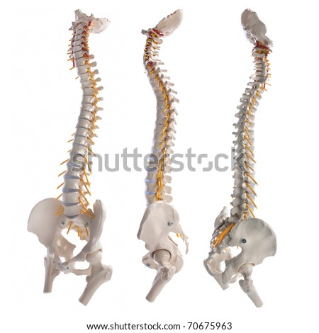 learning model of the human spinal columns
