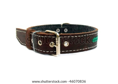 leather animal collar isolated on white
