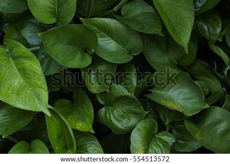 Leaves #554513572