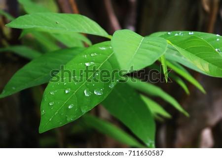 Leaves #711650587