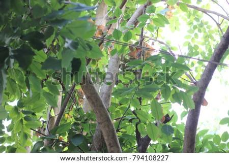 Leaves  #794108227