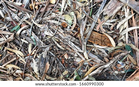 Leaves and dried remains of eucalyptus tree on the ground, Paderne, Galicia, by Fermín Tamames Stok fotoğraf ©