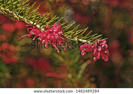 leaves and inflorescences of prickly spider flower #1482489284
