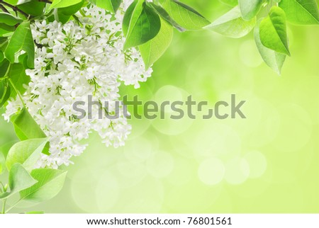 leaves and lilac on the green background
