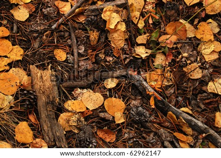 Leaves and needles on the forest floor in the autumn.