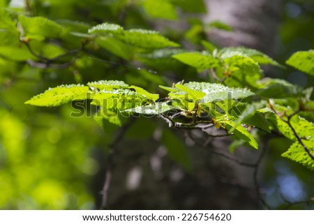 leaves and thorny branches of a tree #226754620