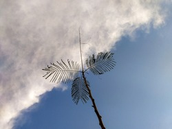 Leaves and twig against the background of blue sky and white clouds.
