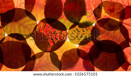 Leaves background, colored leaves, fallen leaves, leaves. #1026575101
