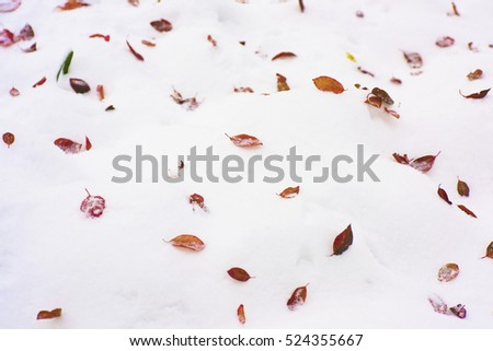 Leaves background in snow.They are as beautiful as painting colors of artist on white canvas. #524355667
