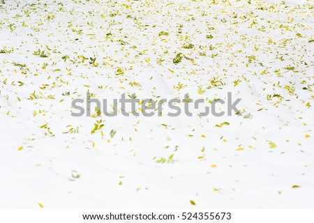 Leaves background in snow.They are as beautiful as painting colors of artist on white canvas