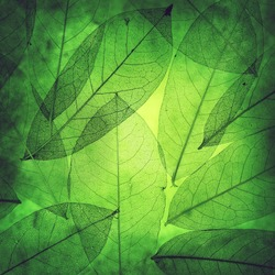 Leaves background texture