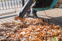 Leaves being vacuumed up a electric corded machine with a collection bag.