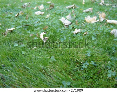 Leaves blowing across grass