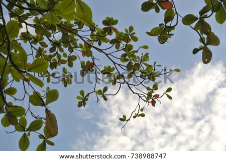 leaves branch and sky #738988747