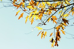 Leaves changing color in Autumn forest