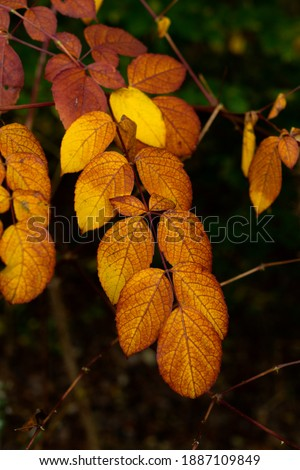 Leaves changing color on Ma and Pa Trail in Harford County, MD. Zdjęcia stock ©
