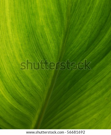 Leaves, close-up