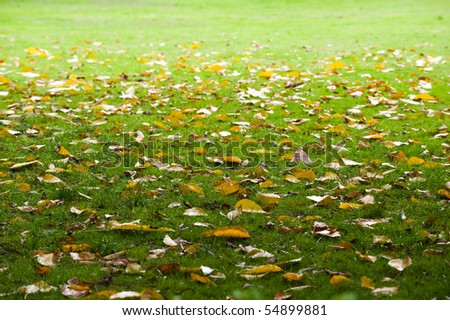 Leaves fall from a tree on green grass.