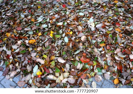 leaves fallen in autumn, fallen autumn yellow and red leaves #777720907