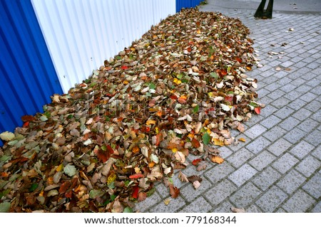 leaves fallen in autumn, fallen autumn yellow and red leaves #779168344