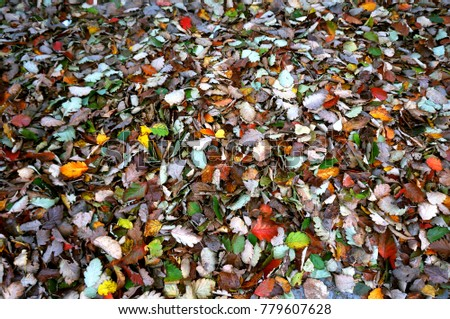 leaves fallen in autumn, fallen autumn yellow and red leaves #779607628