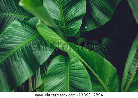 Leaves green Dark Leaf detail In the natural forest #1336512854