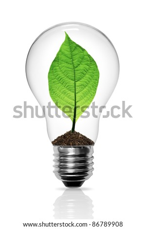 Leaves grow in a light bulb isolated