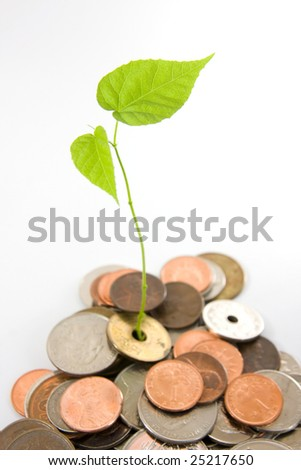 Leaves grow in between coins, focus on the leave. Concept of investment, generating wealth.
