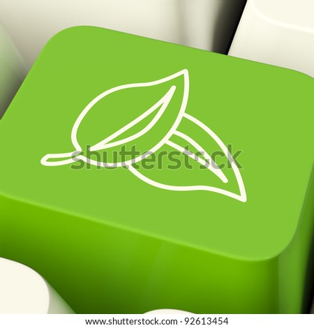 Leaves Icon Computer Key Green Showing Recycling And Eco Friendly