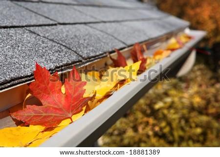 Leaves in a rain gutter