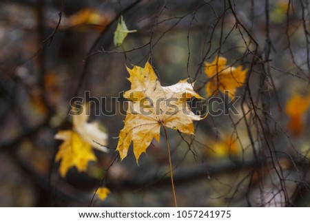 Leaves in autumn, forest in october #1057241975