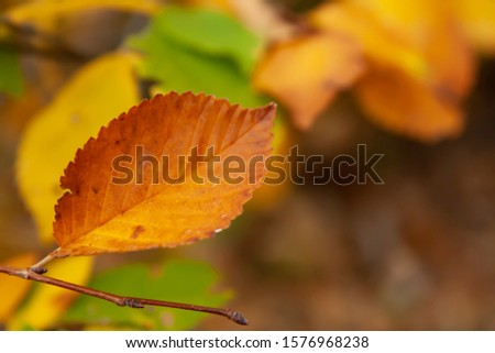 Leaves in the autumn forest. Autumn background. Abstract background of autumn leaves.