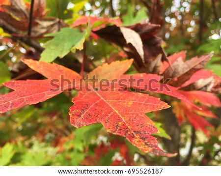Leaves in the Fall #695526187