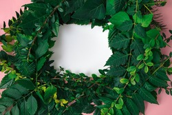Leaves in the form of a wreath on a white background. Copy space