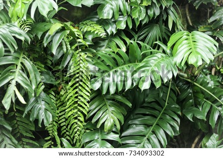 leaves in the garden, Fresh green leaves background in the garden sunlight. Texture of green leaves, Fern leaf in Forest. Garden and Green wall.  - Shutterstock ID 734093302