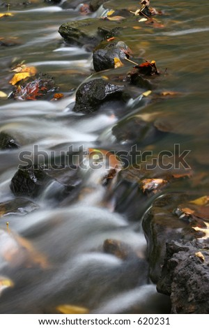Leaves in the stream