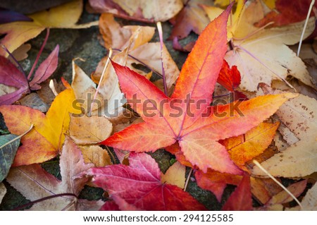 Leaves in various autumnal colors; Fall foliage #294125585