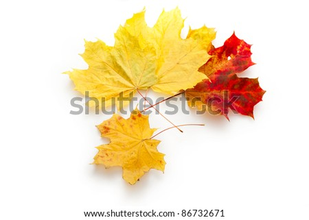 Leaves isolated on the white background