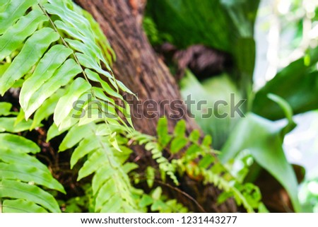 Leaves lush in the garden. #1231443277