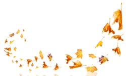 leaves moving flying from the  wind autumn weather background isolated