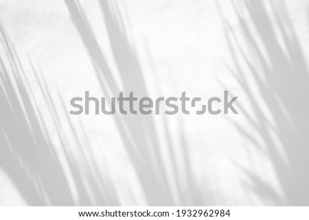 Leaves natural shadow overlay on white texture background, for overlay on product presentation, backdrop and mockup, summer seasonal concept