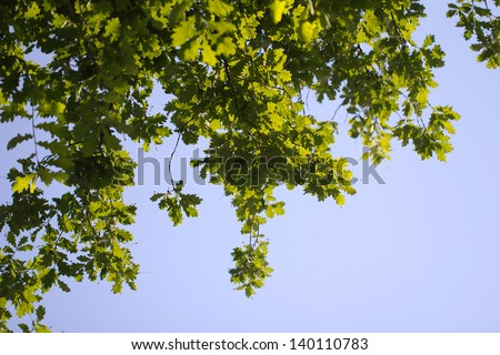 leaves of a tree against a blue sky in the nature