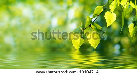Leaves of birch and sunny day over water. Long format.