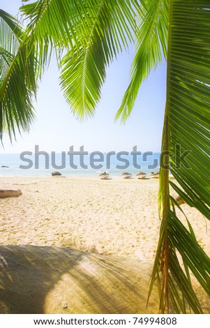 leaves of coconut palms on the sandy beach