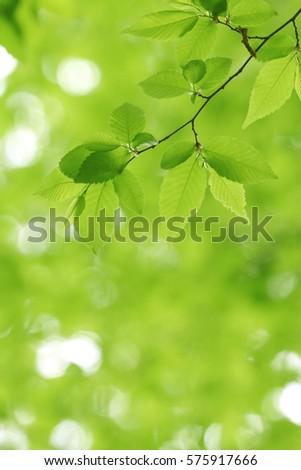Leaves of fresh green.