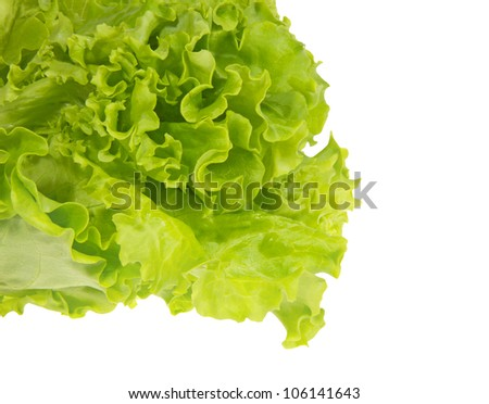 Leaves of green fresh lettuce, isolated on a white background.