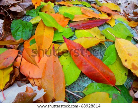 Leaves of many colors create a beautiful scene in southern Wisconsin.