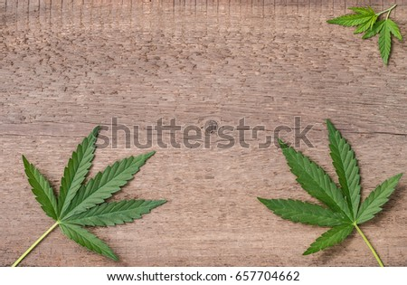 Leaves of marijuana on a background of a wooden texture. #657704662