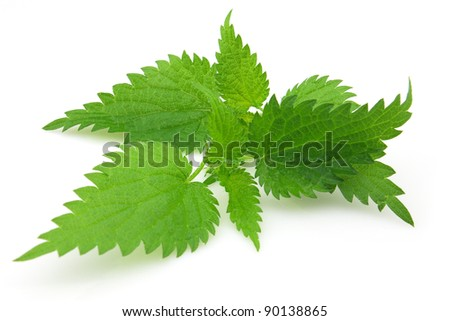 Leaves of nettle - stock photo